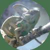 Carlo_Kameleoon_rund
