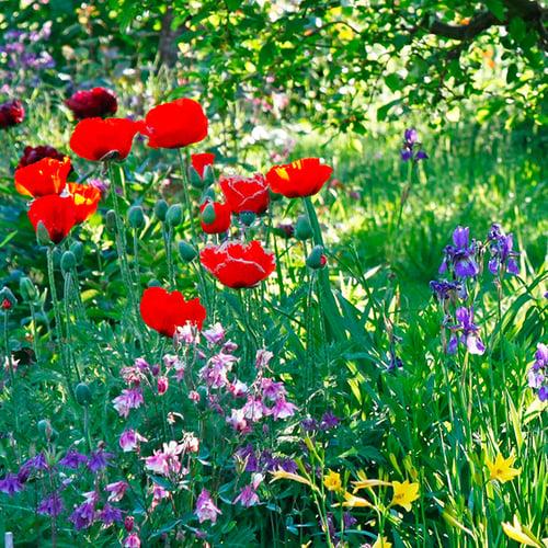 Mein-Schoener-Garten